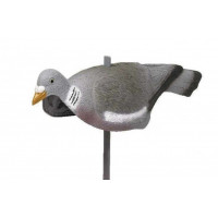 FORME DE PIGEON COQUILLE